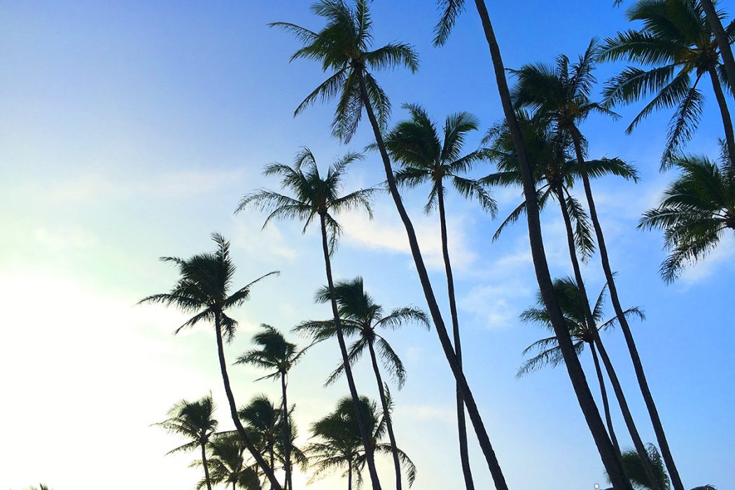 paia_beach_palm_trees