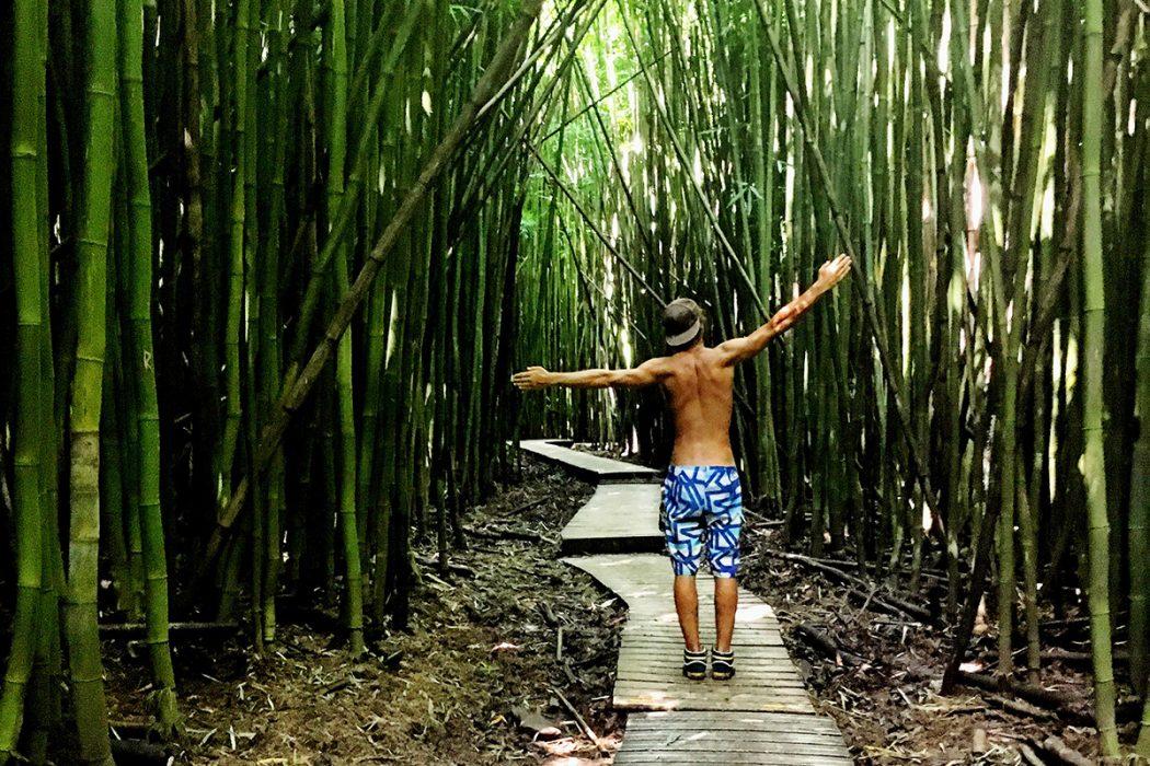 Bambusov gozd