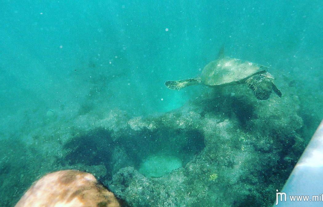 surfing_hookipa_maui_turtle
